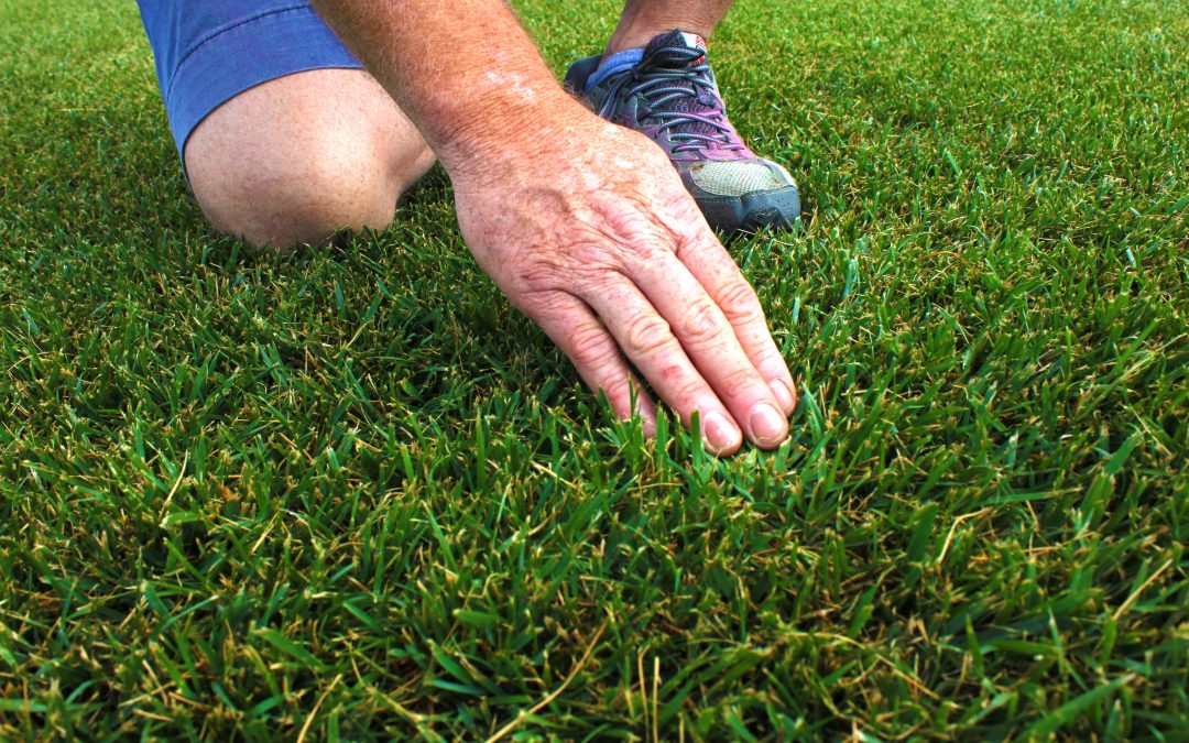 Turf Certification – What is it and Why is it Important?