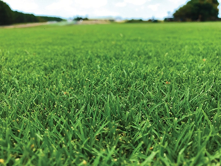 Why we should use natural turfgrass over synthetic