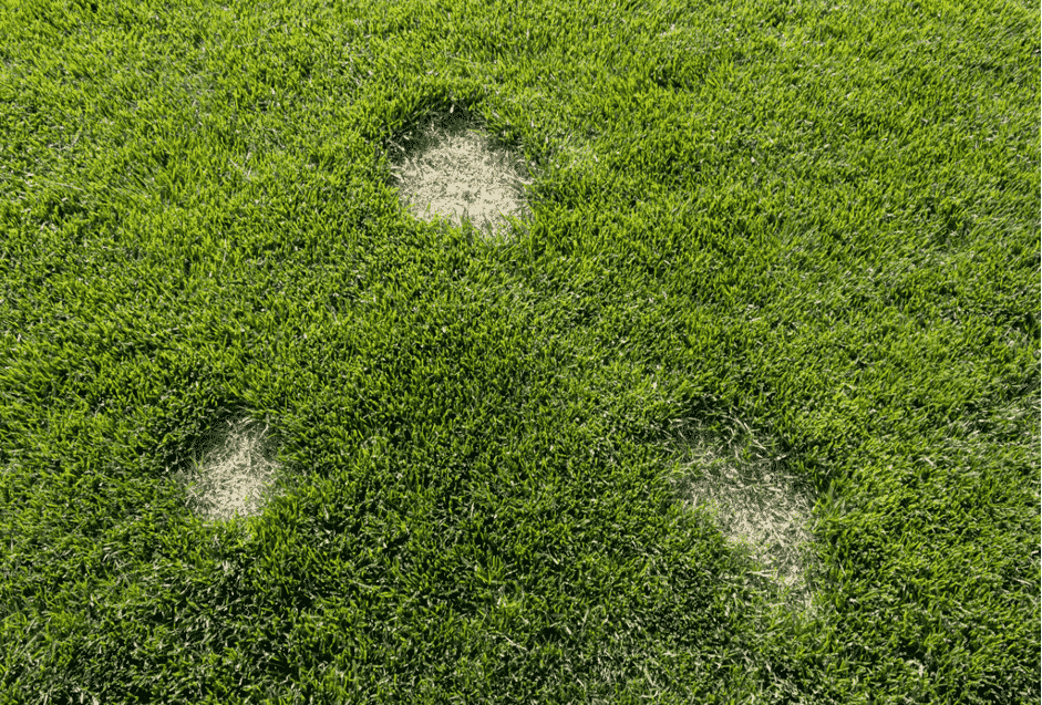 What are common causes of dry patches in turf?